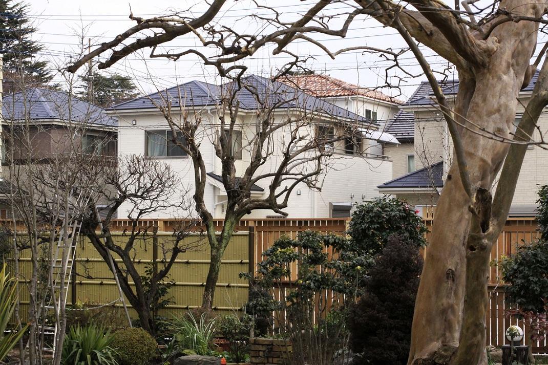 紅梅やっと咲く 2012年1月23日_a0107574_218945.jpg