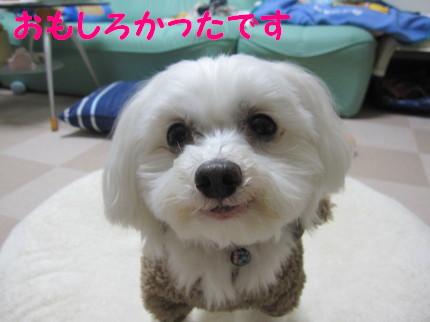 b0193480_1149750.jpg