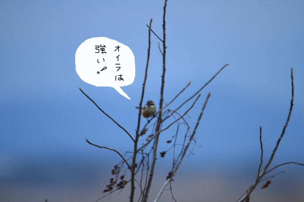 a0183690_19304164.jpg