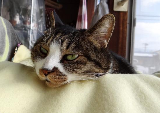 猫部屋のHuu&チョビと、ブラッシング、チョビ玉など♪_a0136293_15451981.jpg