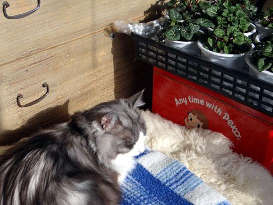 猫部屋のHuu&チョビと、ブラッシング、チョビ玉など♪_a0136293_16112063.jpg