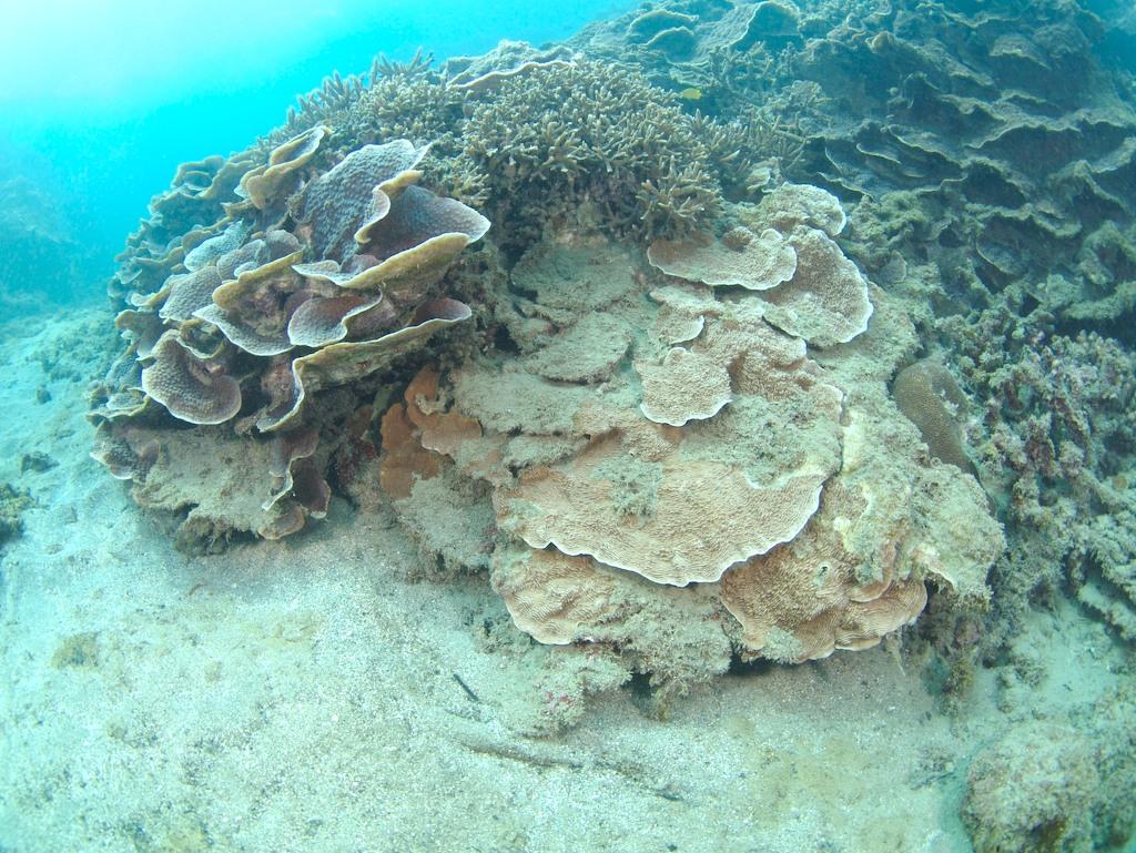 1/21 サンゴ調査_a0010095_22472743.jpg