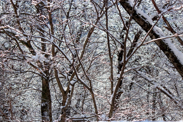 雪と氷の峠にて_a0158797_22333548.jpg