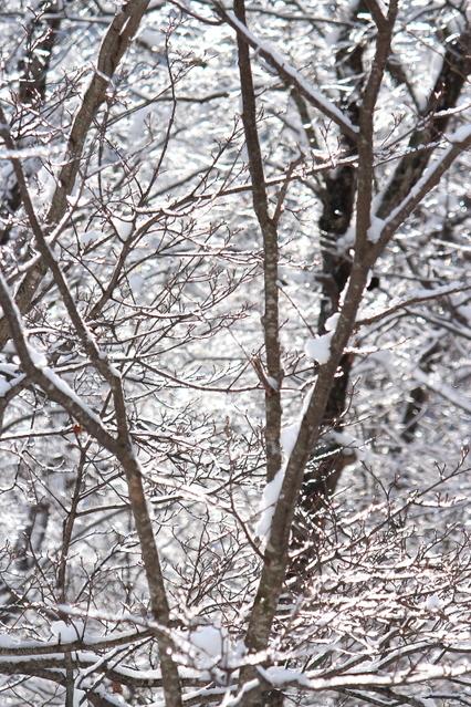 雪と氷の峠にて_a0158797_2234533.jpg