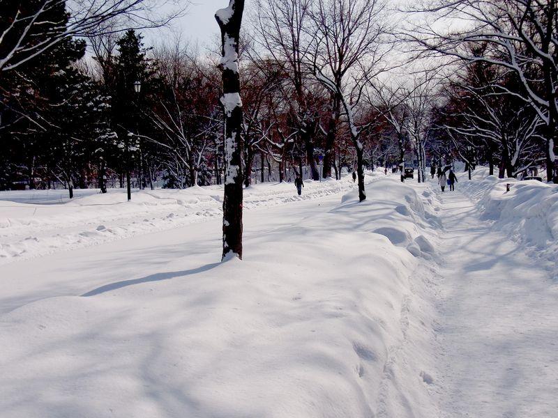 冬晴れのイチョウ並木_c0025115_1965589.jpg