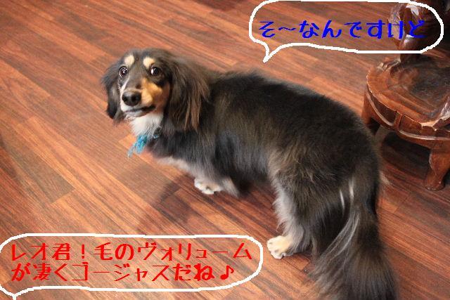 b0130018_05469.jpg