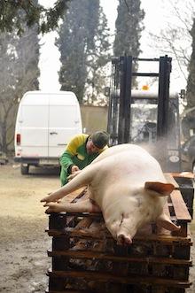 豚を潰す日_a0112221_3445399.jpg
