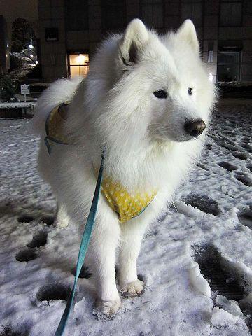 雪降ったよー!_c0062832_6192945.jpg