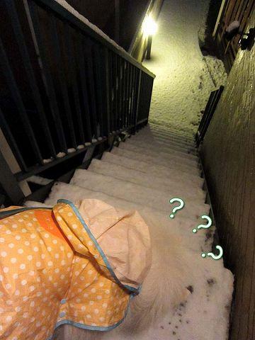 雪降ったよー!_c0062832_641232.jpg