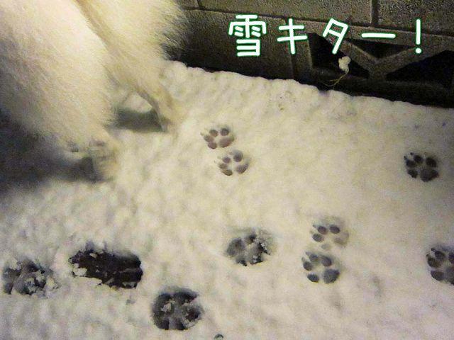 雪降ったよー!_c0062832_641877.jpg