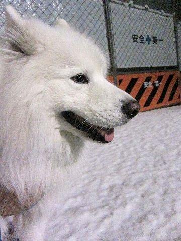 雪降ったよー!_c0062832_64224.jpg
