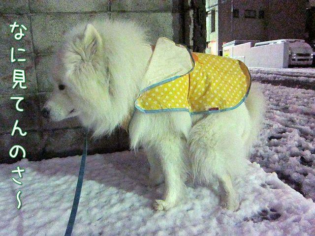 雪降ったよー!_c0062832_643037.jpg