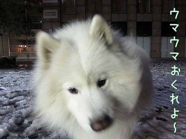 雪降ったよー!_c0062832_644885.jpg