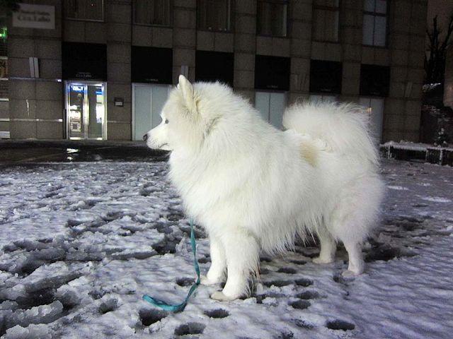 雪降ったよー!_c0062832_64547.jpg