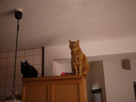 空飛ぶ猫 しぇる編。_a0143140_23244884.jpg