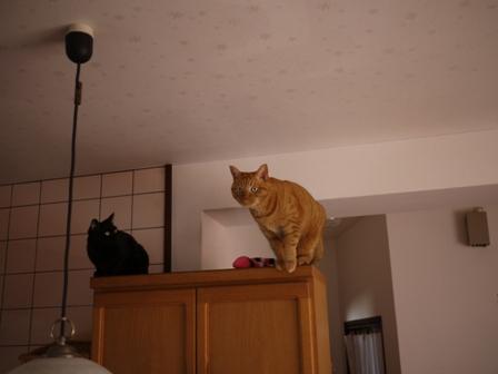 空飛ぶ猫 しぇる編。_a0143140_23252254.jpg