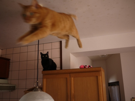 空飛ぶ猫 しぇる編。_a0143140_23254897.jpg