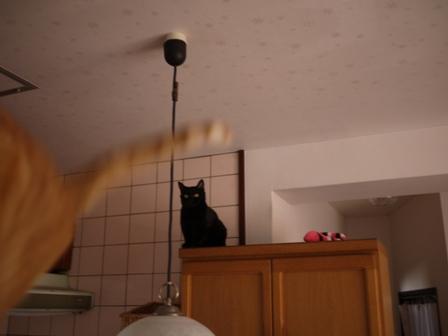 空飛ぶ猫 しぇる編。_a0143140_23261673.jpg