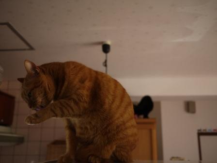 空飛ぶ猫 しぇる編。_a0143140_2326381.jpg