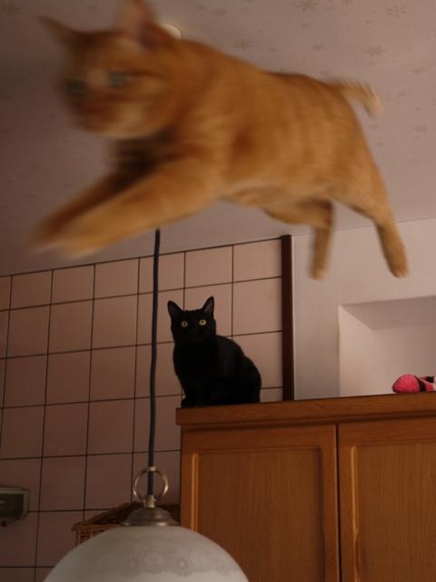 空飛ぶ猫 しぇる編。_a0143140_23421811.jpg