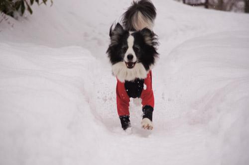 ばらしちゃいます!!雪遊び _e0232343_17512373.jpg