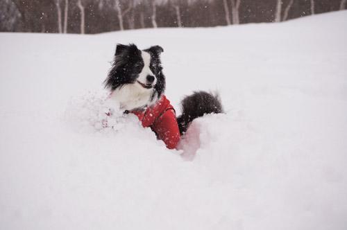 ばらしちゃいます!!雪遊び _e0232343_17522988.jpg