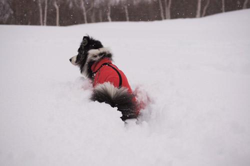 ばらしちゃいます!!雪遊び _e0232343_1752731.jpg