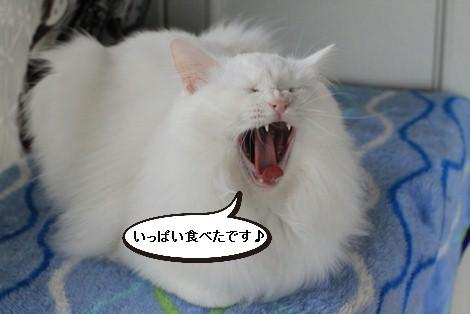 食べない猫さんに悪戦苦闘中_e0151545_2231771.jpg