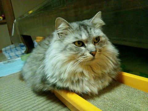 食べない猫さんに悪戦苦闘中_e0151545_22391292.jpg