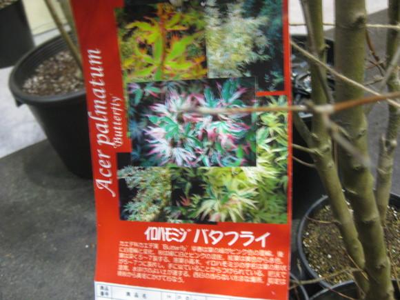 ハイカラ☆モミジ_e0128446_1871594.jpg