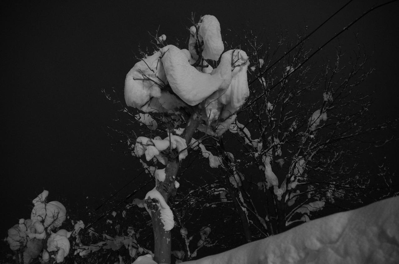 【サンバー】白銀の美瑛 〜木を巡る〜 (追加写真)_e0159646_215766.jpg