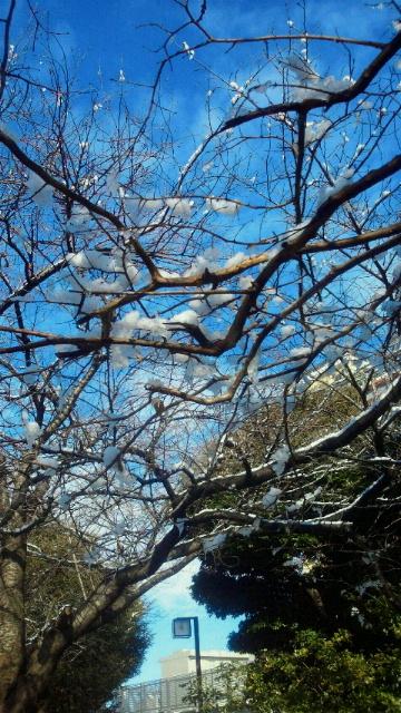 雪月花 『冬季限定 旬生いちご はじめました。』_b0195849_1875597.jpg