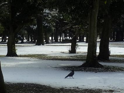 雪の公園_c0113755_21404591.jpg