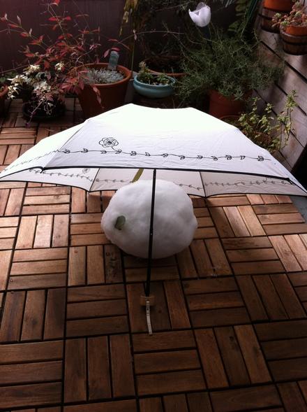 雪やこんこ_a0160758_1472688.jpg