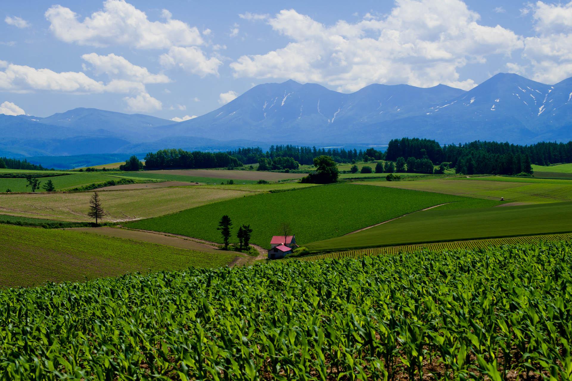 青い山脈 (映画)の画像 p1_31