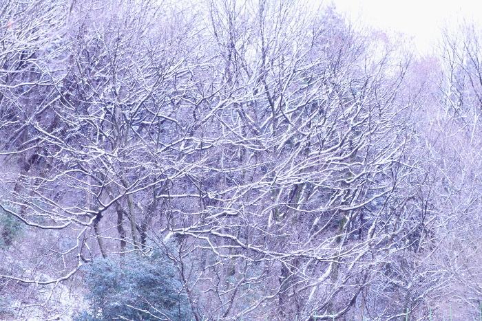 ■■ 銀 雪 ■■_c0195662_2159435.jpg