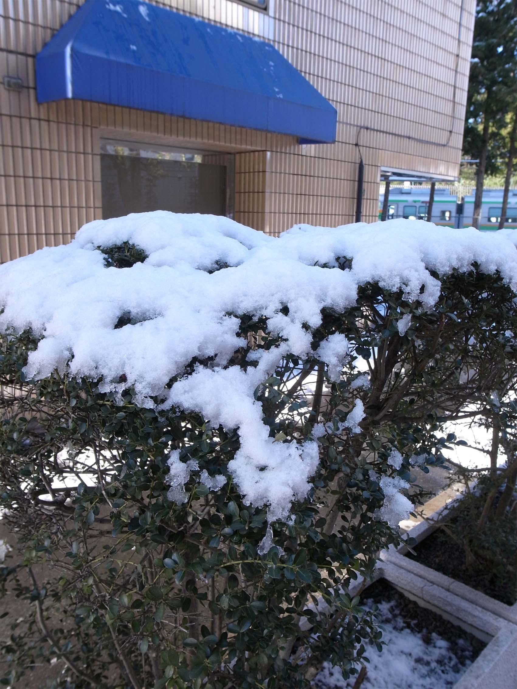 原宿は少しだけ雪景色_f0227963_2022233.jpg