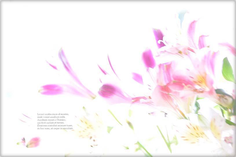 f0198771_024165.jpg