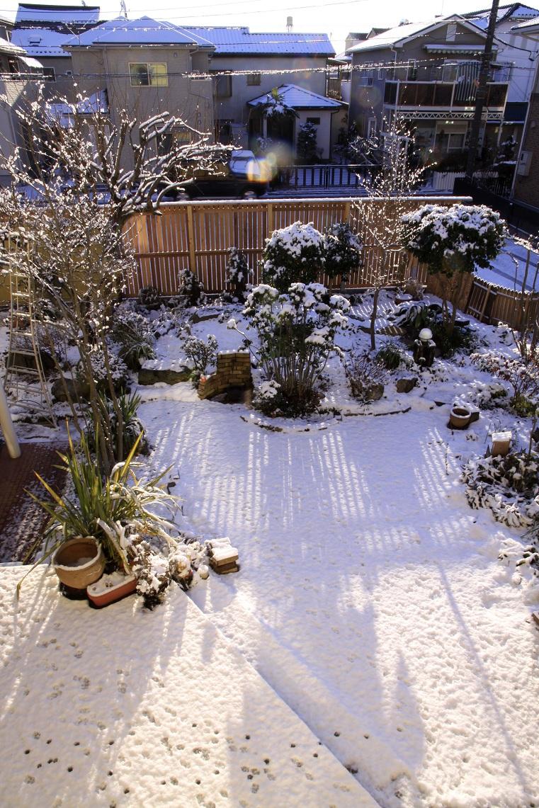 嬉しい雪景色_a0107574_2022436.jpg