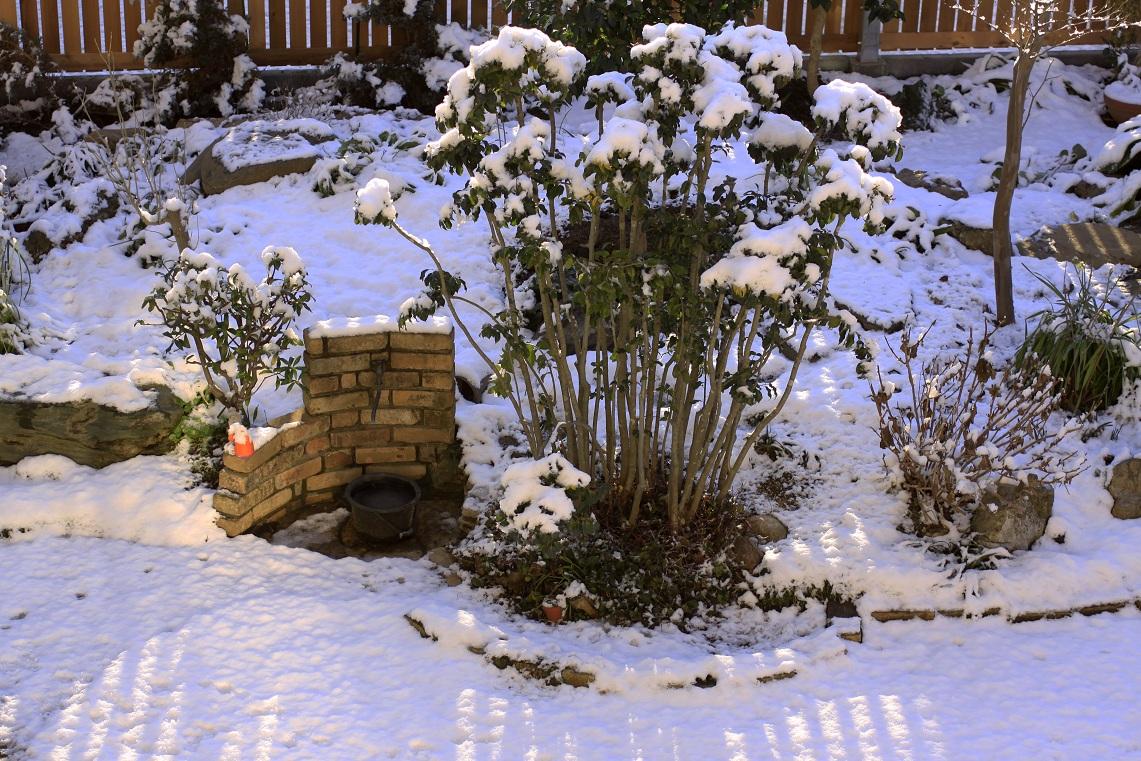 嬉しい雪景色_a0107574_20225660.jpg