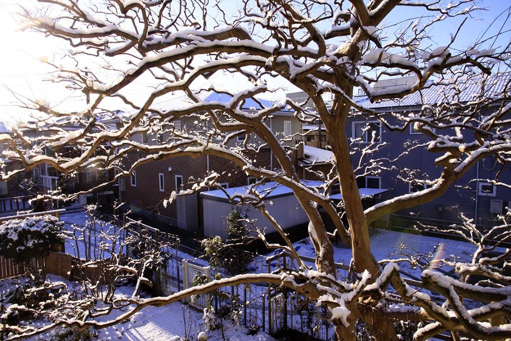 嬉しい雪景色_a0107574_20231772.jpg