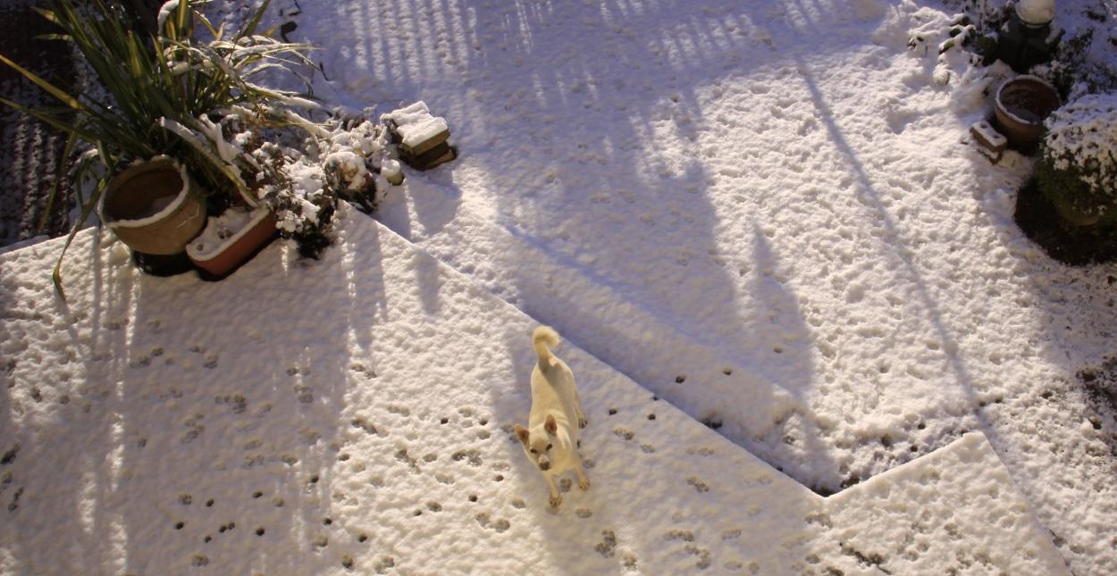 嬉しい雪景色_a0107574_2023644.jpg