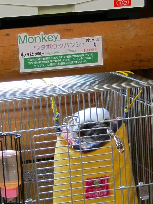 東京・横浜の旅 2~3日目_c0174593_12475915.jpg