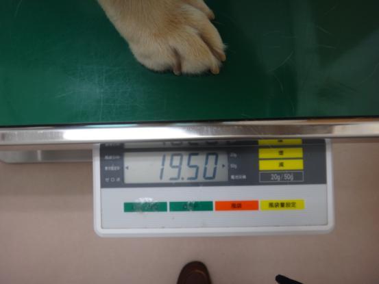 今日は動物病院へ_f0064906_17312813.jpg