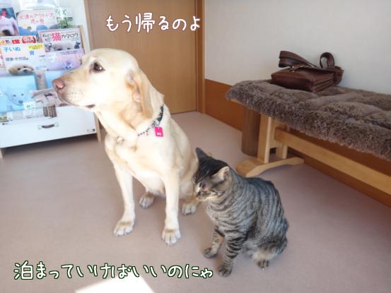 今日は動物病院へ_f0064906_1738746.jpg