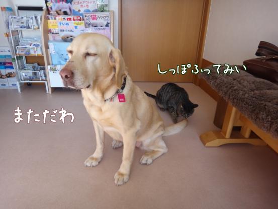 今日は動物病院へ_f0064906_1817569.jpg