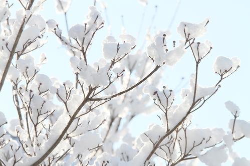 春に向かう雪 #6_f0155808_9104569.jpg