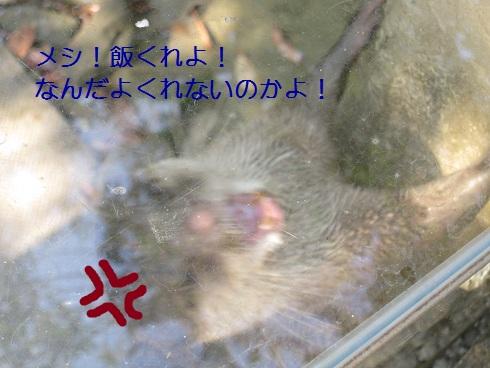 b0115516_22232016.jpg