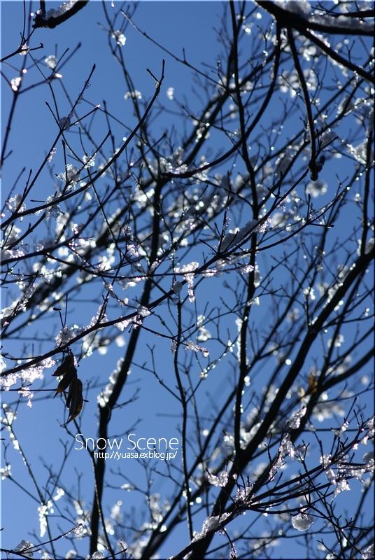 雪景色_f0156117_6544840.jpg