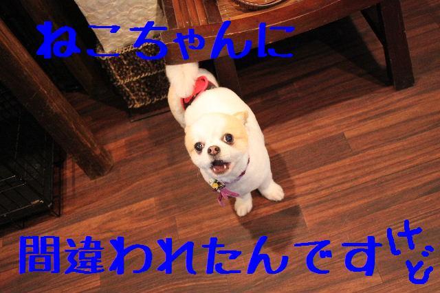 b0130018_19423331.jpg
